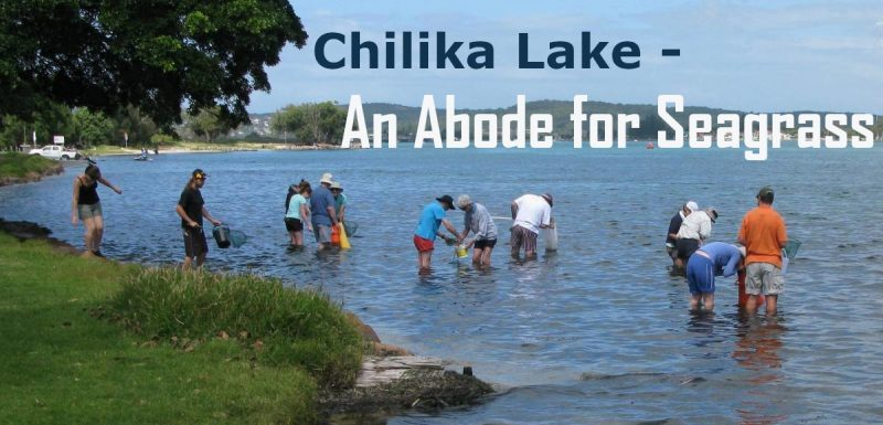 chilika-lake-Odisha-seagrass-20%-india