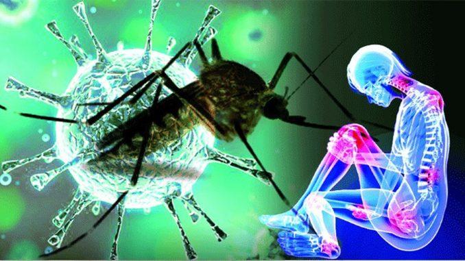 Chikungunya Virus Developed