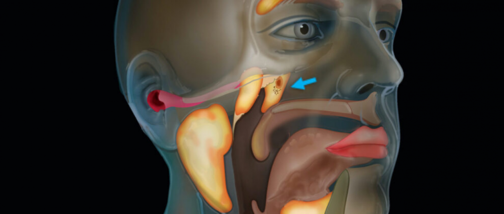 New Organ in Throat Discovered